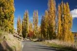 autuminal;autumn;autumn-colour;autumn-colours;autumnal;avenue;avenues;color;colors;colour;colours;deciduous;driving;fall;Hawkes-Bay;leaf;leaves;N.I.;N.Z.;New-Zealand;NI;North-Island;NZ;poplar;poplar-tree;poplar-trees;poplars;road;roads;season;seasonal;seasons;travel;traveling;travelling;tree;trees;Tukituki-Road;Tukituki-Valley