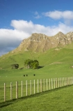 agricultural;agriculture;country;countryside;farm;farming;farmland;farms;fence;fence-line;fence-lines;fence_line;fence_lines;fenceline;fencelines;fences;field;fields;grass;green;Hawkes-Bay;Hawkes-Bay;lush;meadow;meadows;N.I.;N.Z.;New-Zealand;NI;North-Is;North-Is.;North-Island;NZ;paddock;paddocks;pasture;pastures;rural;season;seasonal;seasons;spring;springtime;Te-Mata-Peak;Te-Mata-Pk;Tukituki-River-Valley;verdant