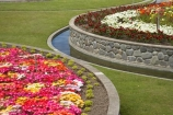 bright;circle;circles;colorful;colourful;curve;curves;flower;flower-bed;flower-beds;flower-garden;flower-gardens;flowerbed;flowerbeds;flowers;Hawkes-Bay;Hawkes-Bay;Marine-Parade;N.I.;N.Z.;Napier;Napier-Waterfront;New-Zealand;NI;North-Is;North-Is.;North-Island;NZ;osteospermum;osteospermums;public-garden;public-gardens;season;seasonal;seasons;spring;springtime;Sunken-Garden