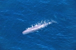 aerials;cetacean;cetaceans;diving;mammal;marine-mammal;ocean;pacific-ocean;Physeter-macrocephalus;sea;tail;tails;whale-tail
