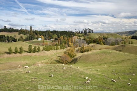 agricultural;agriculture;autuminal;autumn;autumn-colour;autumn-colours;autumnal;Central-North-Island;country;countryside;Erewhon-Station;fall;farm;farming;farmland;farms;field;fields;meadow;meadows;N.I.;N.Z.;Napier-_-Taihape-Road;New-Zealand;NI;North-Island;NZ;paddock;paddocks;pasture;pastures;Rangitikei-District;rural;season;seasonal;seasons