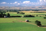 farm;rural;grass;agriculture;farming;farms;pasture;paddock;paddocks;field;fields;meadow;meadows;pastures;wairarapa;north-island;golden;trees;tree;hayshed;farmland;martinborough;lush;green;verdant;fertile