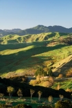 agricultural;agriculture;autuminal;autumn;autumnal;color;colors;colour;colours;country;countryside;deciduous;fall;farm;farming;farmland;farms;field;fields;Hikawera;Hinakura;leaf;leaves;Martinborough;meadow;meadows;N.I.;N.Z.;New-Zealand;NI;North-Island;NZ;paddock;paddocks;pasture;pastures;rural;season;seasonal;seasons;tree;trees;Wairarapa
