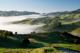 agricultural;agriculture;cloud;cloudy;country;countryside;early-morning;farm;farming;farmland;farms;field;fields;fog;foggy;Hikawera;Hinakura;Martinborough;meadow;meadows;mist;misty;N.I.;N.Z.;New-Zealand;NI;North-Island;NZ;paddock;paddocks;pasture;pastures;rural;Wairarapa