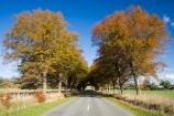 autuminal;autumn;autumn-colour;autumn-colours;autumnal;avenue;avenues;centre-line;centre-lines;centre_line;centre_lines;centreline;centrelines;color;colors;colour;colours;deciduous;driving;fall;Gladstone;highway;highways;leaf;leaves;Martinborough;N.I.;N.Z.;New-Zealand;NI;North-Island;NZ;oak;oak-tree;oak-trees;oaks;open-road;open-roads;road;road-trip;roads;season;seasonal;seasons;straight;transport;transportation;travel;traveling;travelling;tree;trees;trip;Wairarapa