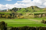 agricultural;agriculture;autuminal;autumn;autumn-colour;autumn-colours;autumnal;color;colors;colour;colours;country;countryside;deciduous;fall;farm;farming;farmland;farms;field;fields;leaf;leaves;Mangaweka;meadow;meadows;N.I.;N.Z.;New-Zealand;NI;North-Island;NZ;paddock;paddocks;pasture;pastures;Rangitikei;rural;season;seasonal;seasons;tree;trees