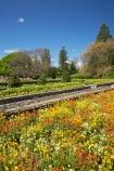bloom;blooming;blooms;blossom;blossoming;blossoms;elizabeth;flower;flower-bed;flower-beds;flowers;Fresh;garden;gardens;grow;Growth;hosking;Hosking-Garden;island;Lower-North-Island;masterton;N.I.;N.Z.;new;new-zealand;NI;north;North-Is;north-is.;north-island;NZ;o8l0713;park;public-garden;public-gardens;queen;Queen-Elizabeth-II-Park;Queen-Elizabeth-II-Pk;Queen-Elizabeth-Park;Queen-Elizabeth-Pk;renew;season;seasonal;seasons;spring;springtime;the;The-Hosking-Garden;wairarapa;yellow;zealand