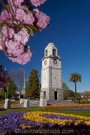 Blenheim;bloom;blooming;blooms;blossom;blossoming;blossoms;clock-tower;floral;flower;flower-beds;flower-garden;flower-gardens;flowers;fresh;grow;growth;heritage;historic;historic-place;historic-places;historic-site;historic-sites;historical;historical-place;historical-places;historical-site;historical-sites;history;Marlborough;memorial-clock-tower;N.Z.;New-Zealand;NZ;old;park;parks;pink-blossom;renew;S.I.;season;seasonal;seasons;Seymore-Sq;Seymore-Square;Seymour-Square;SI;South-Is;South-Is.;South-Island;spring;spring-time;spring_time;springtime;Sth-Is;tradition;traditional;war-memorial-clock-tower;yellow