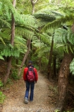 beautiful;beauty;bush;endemic;fern;ferns;forest;forests;green;hike;hiker;hikers;hiking;Marlborough;Marlborough-Sounds;native;native-bush;natives;natural;nature;New-Zealand;ponga;pongas;punga;pungas;Queen-Charlotte-Track;scene;scenic;South-Island;track;tracks;tramp;tramper;trampers;tramping;tree;tree-fern;tree-ferns;trees;trek;treker;trekers;treking;trekker;trekkers;trekking;walk;walker;walkers;walking;walking-track;walking-tracks