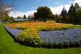 Blenheim;bloom;blooming;blooms;Botanic-Garden;Botanic-Gardens;Botanical-Garden;Botanical-Gardens;floral;flower;flower-beds;flower-garden;flower-gardens;flowers;fresh;grow;growth;Marlborough;N.Z.;New-Zealand;NZ;orange;park;parks;Pollard-Park;renew;S.I.;season;seasonal;seasons;SI;South-Is;South-Is.;South-Island;spring;spring-time;spring_time;springtime;Sth-Is;violet;yellow