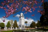 Blenheim;bloom;blooming;blooms;blossom;blossoming;blossoms;clock-tower;flower;flowers;fresh;grow;growth;heritage;historic;historic-place;historic-places;historic-site;historic-sites;historical;historical-place;historical-places;historical-site;historical-sites;history;Marlborough;memorial-clock-tower;N.Z.;New-Zealand;NZ;old;park;parks;renew;S.I.;season;seasonal;seasons;Seymore-Sq;Seymore-Square;Seymour-Square;SI;South-Is;South-Is.;South-Island;spring;spring-time;spring_time;springtime;Sth-Is;tradition;traditional;war-memorial-clock-tower