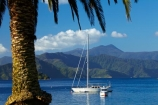 calm;Foreshore-Reserve;Marlborough;Marlborough-Sounds;moor;moored;mooring;moorings;N.Z.;New-Zealand;NZ;palm;palm-tree;palm-trees;palms;park;parks;Picton;Picton-Harbor;Picton-Harbour;placid;Queen-Charlotte-Sound;quiet;reflected;reflection;reflections;S.I.;sail-boat;sail-boats;sailboat;sailboats;serene;SI;smooth;South-Is;South-Island;Sth-Is;still;tranquil;water;yacht;yachts