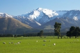 Mid & South Canterbury