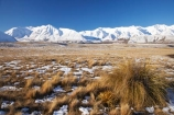 agricultural;agriculture;Canterbury;cold;country;countryside;farm;farming;farmland;farms;field;fields;Hakatere-Conservation-Park;meadow;meadows;Mid-Canterbury;Mount-Catherine;Mt-Catherine;Mt.-Catherine;N.Z.;New-Zealand;NZ;paddock;paddocks;pasture;pastures;rural;S.I.;season;seasonal;seasons;SI;snow;snowy;South-Is;South-Island;Taylor-Range;tussock;tussocks;white;winter;wintery