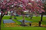 bloom;blooming;blooms;blossom;blossoming;blossoms;Botanic-Garden;Botanic-Gardens;Botanical-Garden;Botanical-Gardens;Canterbury;flower;flower-garden;flower-gardens;flowers;garden;gardens;N.Z.;New-Zealand;NZ;poppies;poppy;S.I.;season;seasonal;seasons;SI;South-Canterbury;South-Is;South-Is.;South-Island;spring;spring-time;spring_time;springtime;Sth-Is;Timaru;Timaru-Botanic-Garden;Timaru-Botanic-Gardens;Timaru-Botanical-Garden;Timaru-Botanical-Gardens;Timaru-Garden;Timaru-Gardens