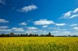 agricultural;agriculture;big-skies;big-sky;canolla;canolla-field;canolla-fields;Canterbury;country;countryside;crop;crops;farm;farming;farmland;farms;field;fields;flower;flowers;horticulture;meadow;meadows;Methven;Methven-Chertsey-Rd;Methven-Chertsey-Road;Methven_Chertsey-Road;Mid-Canterbury;Mount-Hutt;mountain;mountains;Mt-Hutt;N.Z.;New-Zealand;NZ;paddock;paddocks;pasture;pastures;rapeseed;rapeseed-field;rural;S.I.;season;seasonal;seasons;SI;skies;sky;snow;snow-capped;snowy;South-Is;South-Island;southern-alps;spring;spring-time;spring_time;springtime;Sth-Is;yellow;yellow-flower;yellow-flowers