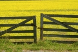 agricultural;agriculture;Canola;canterbury;chain;chained;chains;close;closed;color;colors;colour;colours;country;countryside;crop;cropping;crops;cultivate;cultivation;farm;farming;farmland;farms;fence;fences;field;fields;flower;flowers;gate;gate_way;gate_ways;gates;gateway;gateways;horticultural;horticulture;latch;lock;meadow;meadows;new-zealand;paddock;paddocks;pasture;pastures;rape-seed;rural;shut;south-canterbury;south-island;yellow