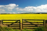 agricultural;agriculture;canterbury;chain;chained;chains;close;closed;cloud;clouds;color;colors;colour;colours;country;countryside;crop;cropping;crops;cultivate;cultivation;farm;farming;farmland;farms;fence;fences;field;fields;flower;flowers;gate;gate_way;gate_ways;gates;gateway;gateways;horticultural;horticulture;latch;lock;meadow;meadows;new-zealand;paddock;paddocks;pasture;pastures;rape-seed;rural;shut;sky;south-canterbury;south-island;yellow
