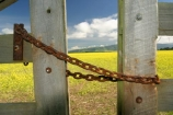 agricultural;agriculture;Canola;canterbury;chain;chained;chains;close;closed;cloud;clouds;color;colors;colour;colours;country;countryside;crop;cropping;crops;cultivate;cultivation;farm;farming;farmland;farms;fence;fences;field;fields;flower;flowers;gate;gate_way;gate_ways;gates;gateway;gateways;horticultural;horticulture;latch;lock;meadow;meadows;new-zealand;paddock;paddocks;pasture;pastures;rape-seed;rapeseed;rural;shut;sky;south-canterbury;south-island;yellow