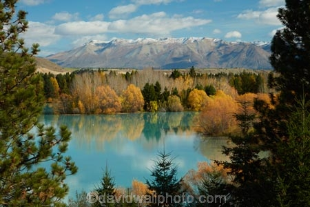 aqua;aquamarine;autuminal;autumn;autumn-colour;autumn-colours;autumnal;Canterbury;color;colors;colour;colours;deciduous;fall;gold;golden;lake;Lake-Ruataniwha;lakes;leaf;leaves;Mackenzie-Country;Mackenzie-District;Mackenzie-Region;N.Z.;New-Zealand;North-Otago;NZ;Ohau-Ra;Ohau-Range;Otago;S.I.;season;seasonal;seasons;SI;South-Canterbury;South-Is;South-Island;Sth-Is;tree;trees;turquoise;willow;willow-tree;willow-trees;willows;yellow