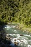 B.O.P.;Bay-of-Plenty;BOP;bush;clean;clean-river;clean-rivers;clean-water;forest;forests;N.I.;N.Z.;native;native-bush;natural;New-Zealand;NI;North-Is;North-Island;NZ;rapids;river;rivers;Waioeka-Gorge;Waioeka-River;water;white-water