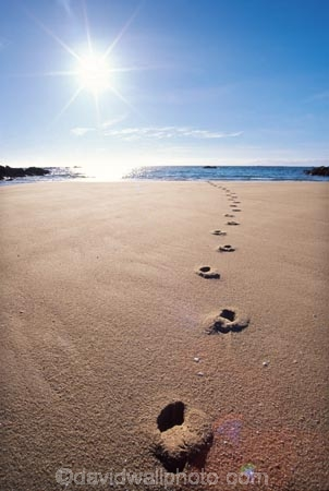 beach;track;tracks;beaches;footprint;footprints;sun;sunny;dawn;early-morning;foot-print
