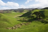 agricultural;agriculture;Cape-Farewell;country;countryside;farm;farming;farmland;farms;field;fields;hill;hills;hilly;meadow;meadows;N.Z.;Nelson-Region;New-Zealand;NZ;paddock;paddocks;pasture;pastures;rural;S.I.;SI;South-Is.;South-Island