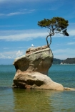 Abel-Tasman;Abel-Tasman-N.P.;Abel-Tasman-National-Park;Abel-Tasman-NP;beach;beaches;coast;coastal;coastline;coastlines;coasts;hot;N.Z.;national-park;national-parks;Nelson-Region;New-Zealand;NZ;ocean;oceans;rock;S.I.;sea;seas;shore;shoreline;shorelines;shores;South-Is;South-Island;Sth-Is;summer;Tasman-Bay;Tasman-District;Tinline-Bay;tree;tree-on-rock;water
