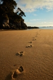 Abel-Tasman;Abel-Tasman-N.P.;Abel-Tasman-National-Park;Abel-Tasman-NP;beach;beaches;coast;coastal;coastline;coastlines;coasts;dawn;early-morning;foot-print;foot-prints;footprint;footprints;golden-sand;hot;Mosquito-Bay;N.Z.;national-park;national-parks;Nelson-Region;New-Zealand;NZ;ocean;oceans;S.I.;sand;sandy;sea;seas;shore;shoreline;shorelines;shores;South-Is;South-Island;Sth-Is;summer;sun;sunny;Tasman-Bay;Tasman-District;track;tracks;water