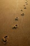 Abel-Tasman;Abel-Tasman-N.P.;Abel-Tasman-National-Park;Abel-Tasman-NP;beach;beaches;coast;coastal;coasts;dawn;early-morning;foot-print;foot-prints;footprint;footprints;golden-sand;hot;Mosquito-Bay;N.Z.;national-park;national-parks;Nelson-Region;New-Zealand;NZ;S.I.;sand;sandy;South-Is;South-Island;Sth-Is;summer;sun;sunny;Tasman-Bay;Tasman-District;track;tracks