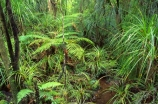 botany;bush;flora;foiliage;forests;native;timber;trees;wood