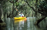 color;colors;colour;colours;green;kayak;kayaker;mangrove;natural;nature;rivers;scene;scenic;sea-kayak;water;water-fall;water-falls;waterfall;waterfalls;wet;yellow
