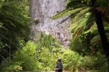 ancient;big;biggest;black-tree-fern;botany;bush;enormous;fern;ferns;flora;foiliage;forest;forests;giant;gigantic;huge;kauri;kauri-tree;kauri-trees;kauris;large;largest;mamaku;native;native-bush;native-forest;new-zealand;north-is.;north-island;Northland;old;ponga;punga;Tane-Mahuta;timber;tourism;tourist;tourists;tree;trees;very-old;Waipoua-Forest;waipoua-kauri-forest;wood