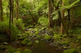 A.H.-Reed-Memorial-Kauri-Park;A.H.-Reed-Memorial-Park;beautiful;beauty;brook;brooks;bush;creek;creeks;cyathea;endemic;fern;ferns;flora;flow;forest;forestry;forests;frond;fronds;green;Kauri-Forest;Kauri-Forests;lush;N.I.;N.Z.;native;native-bush;natives;natural;nature;New-Zealand;NI;North-Is;North-Is.;North-Island;Northland;NZ;outdoor;outdoors;plant;plants;ponga;pongas;punga;pungas;rain-forest;rain-forests;rain_forest;rain_forests;rainforest;rainforests;scene;scenic;stream;streams;tree;tree-fern;tree-ferns;tree-trunk;tree-trunks;trees;trunk;trunks;undergrowth;Waikoromiko-Stream;water;watercourse;wet;Whangarei;wood;woods