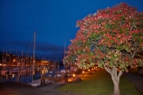 boat;boats;calm;calmness;dusk;evening;fishing-boats;flower;flowers;harbor;harbors;harbour;harbours;hull;hulls;launch;launches;marina;marinas;mast;masts;metrosideros-excelsa;N.I.;N.Z.;native;native-plant;native-plants;New-Zealand;NI;night;night-time;night_time;North-Is;north-is.;North-Island;Northland;NZ;peaceful;peacefulness;plant;plants;pohutakawa;pohutakawas;pohutukawa;pohutukawa-flower;pohutukawa-flowers;pohutukawa-tree;pohutukawa-trees;pohutukawas;port;ports;reflection;reflections;sail;sailing;still;stillness;summer;sunset;Town-Basin;tranquil;tranquility;tree;trees;twilight;Whangarei;Whangarei-Basin;Whangarei-Harbor;Whangarei-Harbour;Whangarei-Marina;yacht;yachts