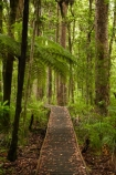 beautiful;beauty;boardwalk;boardwalks;bush;cyathea;endemic;fern;ferns;forest;forest-reserve;forests;frond;fronds;green;hiking-track;hiking-tracks;Kauri-Coast;kauri-forest;kauri-forests;Kauri-Tree;Kauri-Trees;lush;N.I.;N.Z.;native;native-bush;natives;natural;nature;New-Zealand;NI;North-Is;North-Is.;North-Island;Northland;NZ;plant;plants;ponga;pongas;punga;pungas;rain-forest;rain-forests;rain_forest;rain_forests;rainforest;rainforests;scene;scenic;timber;track;tracks;tree;tree-fern;tree-ferns;tree-trunk;tree-trunks;trees;Trounson-Kauri-forest;Trounson-Kauri-Park;Trounson-Park;trunk;trunks;walking-track;walking-tracks;wood;woods