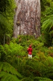 2000-year-old-kauri-tree;beautiful;beauty;bg-kauri;bg-kauris;big-tree;big-trees;bush;endemic;forest;forests;giant-2000-year-old-kauri-tree;giant-kauri;giant-kauris;giant-tree;giant-trees;green;kauri;Kauri-Coast;kauri-forest;kauri-forests;kauri-tree;kauri-trees;kauris;Lord-of-the-Forest;lush;N.I.;N.Z.;native;native-bush;natives;natural;nature;New-Zealand;NI;North-Is;North-Is.;North-Island;Northland;NZ;people;person;rain;rain-forest;rain-forests;rain_forest;rain_forests;rainforest;rainforests;raining;rainy;scene;scenic;Tane-Mahuta;Tane-Mahuta-Kauri-Tree;timber;tourism;tourist;tourists;tree;tree-trunk;tree-trunks;trees;trunk;trunks;Waipoua;Waipoua-Forest;Waipoua-Kauri-forest;wood;woods