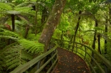 beautiful;beauty;boardwalk;boardwalks;bush;cyathea;endemic;fern;ferns;footpath;footpaths;forest;forest-reserve;forest-track;forest-tracks;forests;frond;fronds;green;hiking-track;hiking-tracks;kauri-forest;kauri-forests;Kauri-Tree;Kauri-Trees;Kerikeri;lush;Manginangina;Manginangina-Kauri-Walk;Manginangina-Walk;N.I.;N.Z.;native;native-bush;natives;natural;nature;New-Zealand;NI;North-Is;North-Is.;North-Island;Northland;NZ;path;paths;plant;plants;ponga;pongas;Puketi-Forest;punga;pungas;rain-forest;rain-forests;rain_forest;rain_forests;rainforest;rainforests;scene;scenic;timber;track;tracks;tree;tree-fern;tree-ferns;tree-trunk;tree-trunks;trees;trunk;trunks;walking-track;walking-tracks;wood;woods