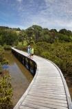 Auckland-Region;boardwalk;boardwalks;boy;bridge;bridges;child;children;estuaries;estuary;families;family;foot-bridge;foot-bridges;footbridge;footbridges;girl;hiking-track;hiking-tracks;inlet;inlets;lagoon;lagoons;mangrove;mangrove-boardwalk;mangrove-boardwalks;mangrove-swamp;mangrove-swamps;mangroves;mother;N.I.;N.Z.;New-Zealand;NI;North-Is;North-Is.;North-Island;Northland;NZ;pedestrian-bridge;pedestrian-bridges;people;person;Rodney-District;Sandspit;tidal;tide;tides;tourism;tourist;tourists;track;tracks;walking-track;walking-tracks;Warkworth;water
