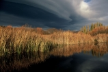 autumn;cloud;clouds;color;colors;colour;colours;fall;grey;rain;reed;reeds;reflection;reflections;storms;winter