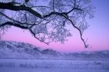 branch;cold;dusk;freeze;freezing;frost;frosty;hoar;ice;last-light;mountain;mountains;slippery;snow;sunset;tree;twilight;winter