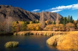 autumn;autumnal;fall;gold;golden;lake;lakes;marsh;marshes;polars;pond;rushes,water;tree;trees;water;willow;willows