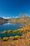 autuminal;autumn;autumn-colour;autumn-colours;autumnal;berries;berry;briar;briars;color;colors;colour;colours;deciduous;fall;gold;golden;lake;Lake-Benmore;lakes;leaf;leaves;N.Z.;New-Zealand;North-Otago;NZ;Otago;red-berries;red-berry;rose_hip;rosehip;S.I.;Sailors-Cutting;Sailors-Cutting;season;seasonal;seasons;SI;South-Island;Sth-Is;Sth-Is.;tree;trees;Waitaki;Waitaki-District;Waitaki-Region;Waitaki-Valley;willow;willow-tree;willow-trees;willows;yellow