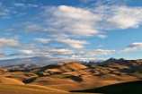 Duntroon;farm;farmland;farms;hill;hills;Landscape;light;New-Zealand;North-Otago;rural;South-Island;waitaki
