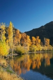 autuminal;autumn;autumn-colour;autumn-colours;autumnal;calm;color;colors;colour;colours;deciduous;fall;lake;Lake-Aviemore;lakes;N.Z.;New-Zealand;North-Otago;NZ;Otago;placid;quiet;reflection;reflections;S.I.;season;seasonal;seasons;serene;SI;smooth;South-Island;still;tranquil;tree;trees;Waitaki-District;Waitaki-Region;Waitaki-Valley;water;yellow