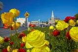 Anglican;bloom;blooming;blooms;building;buildings;christian;christianity;church;churches;faith;flower;flowers;heritage;historic;historic-building;historic-buildings;historical;historical-building;historical-buildings;history;N.Z.;New-Zealand;North-Otago;NZ;Oamaru;old;Otago;place-of-worship;places-of-worship;religion;religions;religious;S.I.;Saint-Lukes-Anglican-Church;Saint-Lukes-Church;season;seasonal;seasons;SI;South-Is;South-Island;spring;spring-time;spring_time;springtime;St-Lukes-Anglican-Church;St-Lukes-Church;St-Lukes-Anglican-Church;St-Lukes-Church;Sth-Is;Thames-St;Thames-Street;tradition;traditional;Waitaki;Waitaki-District;yellow;yellow-flowers
