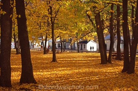 cottage;cottages;fall;historic;historical;leaf;leaves;tree;trees;yellow