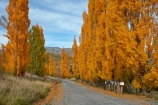 Arrowtown;autuminal;autumn;autumn-colour;autumn-colours;autumnal;color;colors;colour;colours;communication;communications;country;countryside;Crown-Range;Crown-Range-Rd;Crown-Range-Road;Crown-Terrace;deciduous;deliver;delivery;fall;gold;golden;Jeffrey-Rd;Jeffrey-Road;leaf;leaves;letter-box;letter-boxes;letter_box;letter_boxes;letterbox;letterboxes;mail-box;mail-boxes;mail_box;mail_boxes;mailbox;mailboxes;N.Z.;New-Zealand;NZ;Otago;poplar;poplar-tree;poplar-trees;poplars;post;post-box;post-boxes;post_box;post_boxes;postbox;postboxes;Queenstown;row;rural;rural-delivery;Rural-Letterboxes;season;seasonal;seasons;snail-mail;snail_mail;snailmail;South-Is;South-Island;Sth-Is;tree;trees;yellow