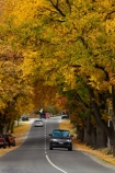 Arrowtown;autuminal;autumn;autumn-colour;autumn-colours;autumnal;car;cars;color;colors;colour;colours;deciduous;fall;gold;golden;leaf;leaves;N.Z.;New-Zealand;NZ;Otago;Queenstown;Range-Rover;Range_Rover;RangeRover;road;roads;season;seasonal;seasons;South-Is;South-Island;Sth-Is;tree;trees;yellow