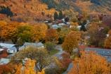 Arrowtown;Arrowtown-Hill;autuminal;autumn;autumn-colour;autumn-colours;autumnal;central-otago;color;colors;colour;colours;conifer;conifers;deciduous;fall;gold;golden;larch;leaf;leaves;mountain-ash;N.Z.;near-Queenstown;New-Zealand;NZ;orange;orange-mountain-ash;Otago;pine;pine-tree;pine-trees;pines;Queenstown;rowan;rowan-tree;rowan-trees;S.I.;season;seasonal;seasons;SI;sorbus;Sorbus-aucaparia;South-Is;South-Is.;South-Island;Southern-Lakes;Southern-Lakes-District;Southern-Lakes-Region;Sth-Is;tree;trees;yellow